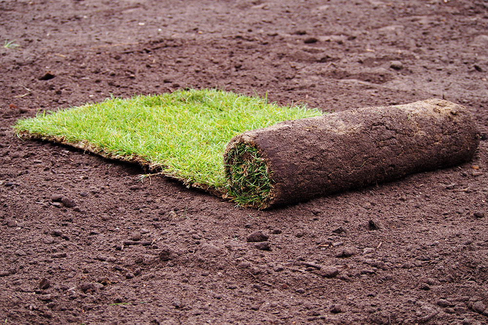 Key way to Laying Sod Sanbornville, Carroll
