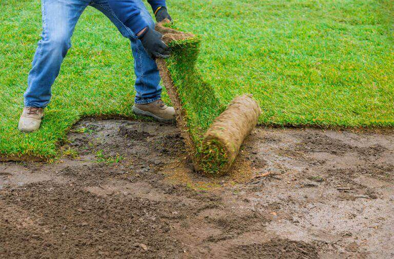 In Sanbornville Tall fescue lawn grass suppliers