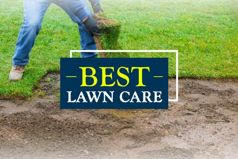Best Lawn Care: The Ladder To Greener Grass | Green Yard Now