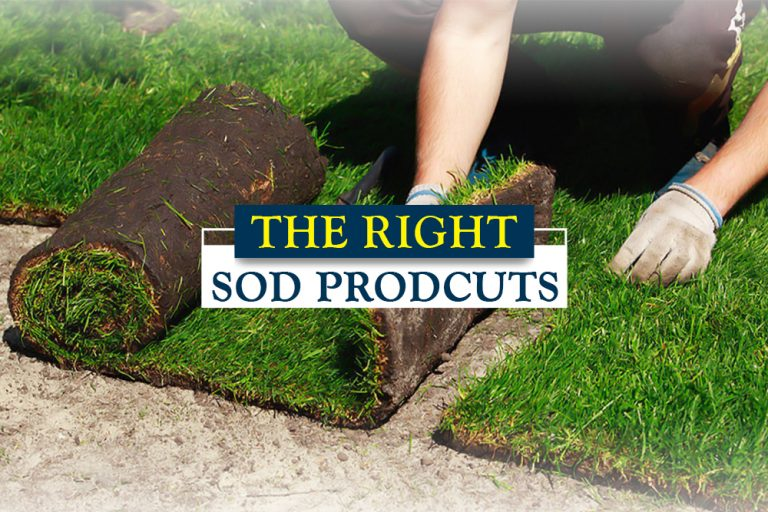 How To Choose The Right Sod Products For Your Yard | Green Yard Now