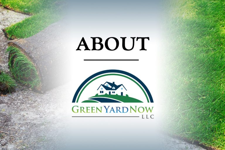 Things You Need To Know About Green Yard Now LLC