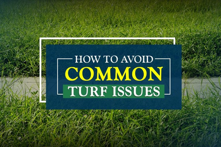 Common Turf Issues