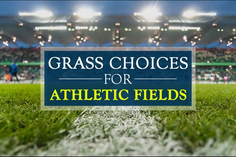 Best Grass Choices For Athletic Fields | Green Yard Now