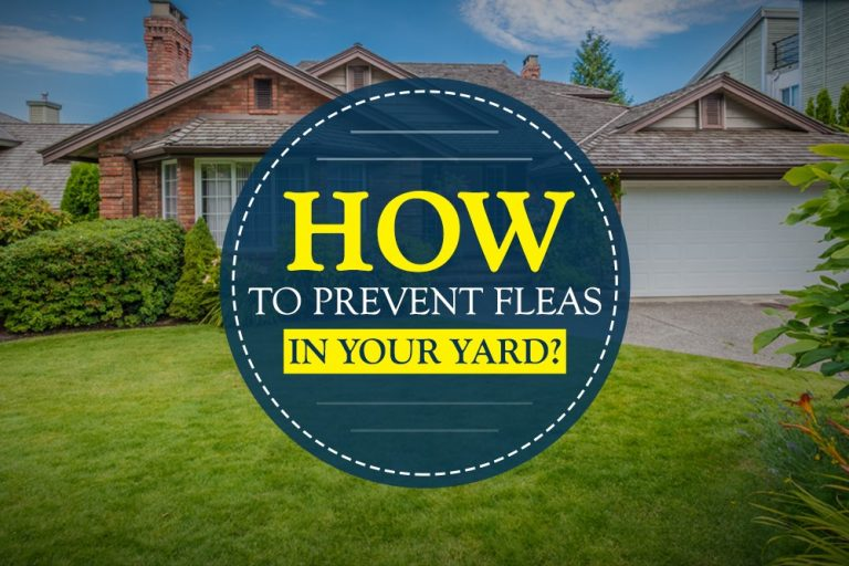 Prevent Fleas In Your Yard